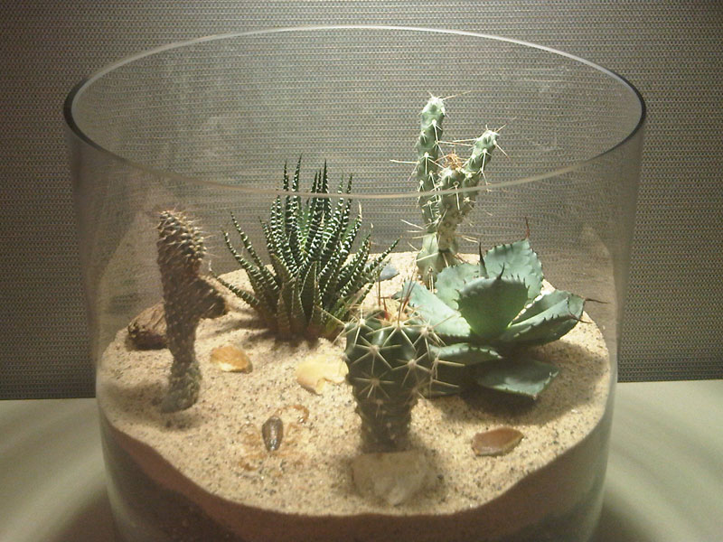 howtonot build a cactus terrarium online guide to the positive, Natural flower