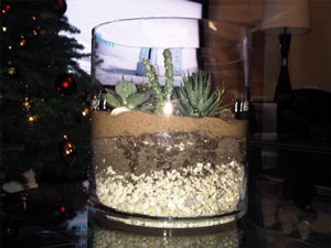 soil layer terrarium