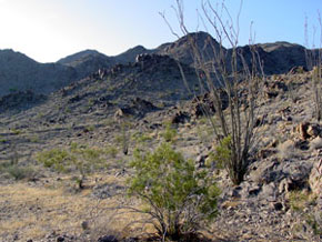 Colorado Desert with Ocotillo and Creosote Bush