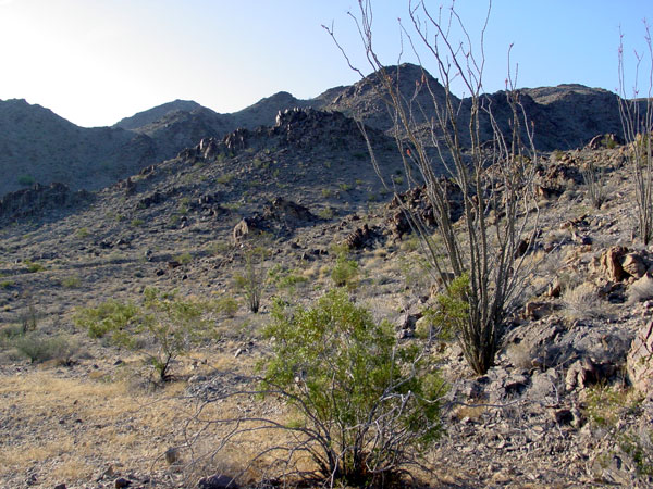 A Cactus Odyssey in Arizona On-line Guide to the positive