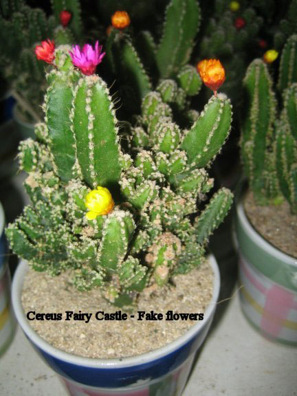 Cactus flowers real or fake on line guide to the positive fake flowers on cactus mightylinksfo