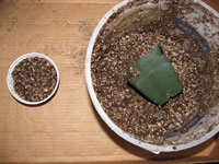 fill cactus seed pots