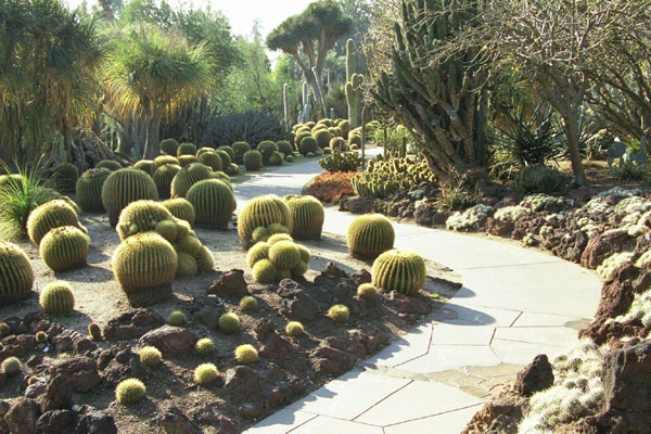 pictures of public cactus gardens with cacti online guide to the, Beautiful flower