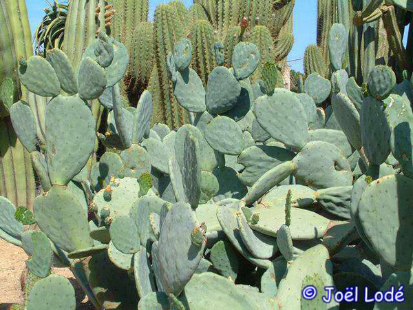 how to know if your cacti is dying