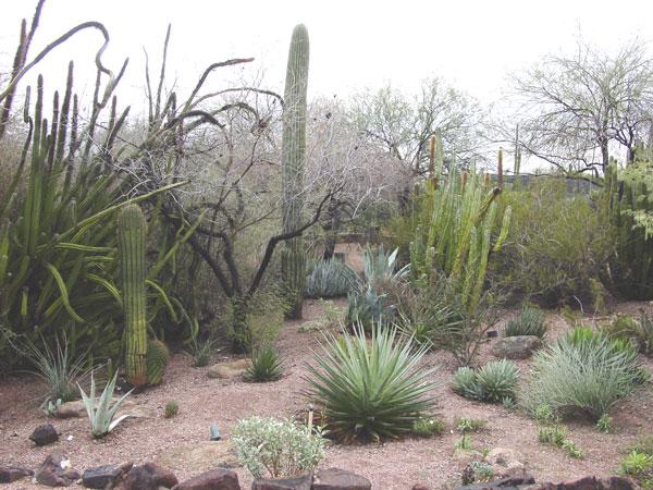 Desert Botanical Garden · Cactus Botanical Garden ...