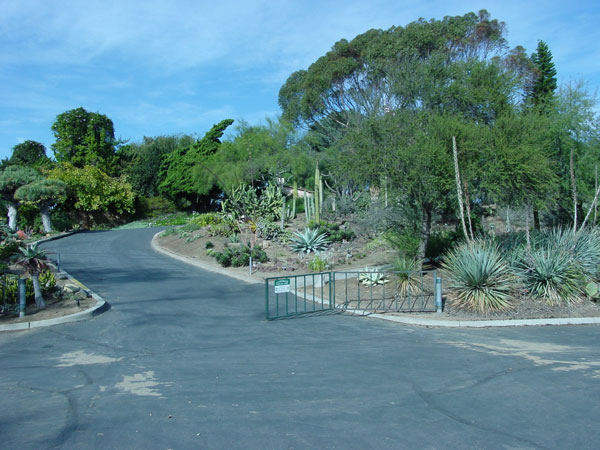 Pictures Of Public Cactus Gardens With Cacti On Line Guide