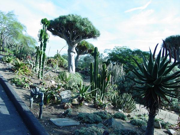 Charmant ... Cacti Botanical Garden · Quail Cactus Garden Encinitas